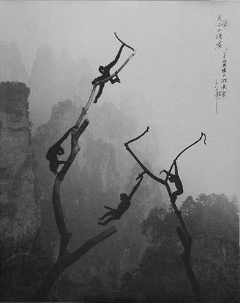 Don Hong-Oai - Gibbons at Play, Tianzi Mountains, Guilin, China