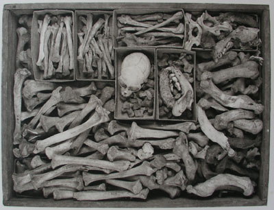 Joseph McDonald - Untitled (Bones in Box)