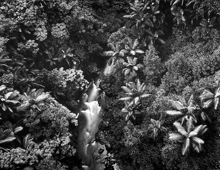 Stuart Levy - Rainforest, Hawaii